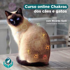 Curso Online CHAKRAS DOS CÃES E GATOS